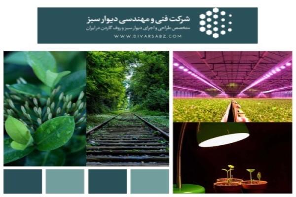 تاثیر نور بر رشد گیاه