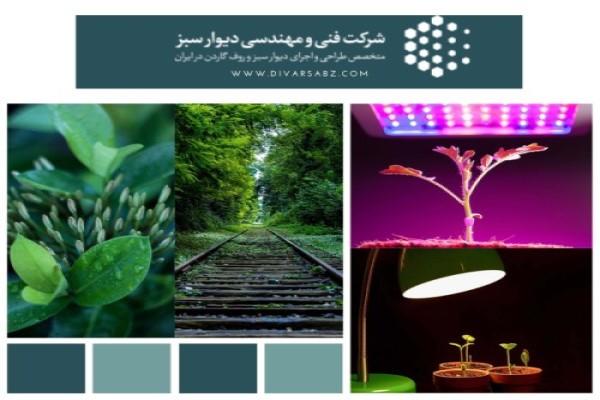 نور آبی در رشد گیاه