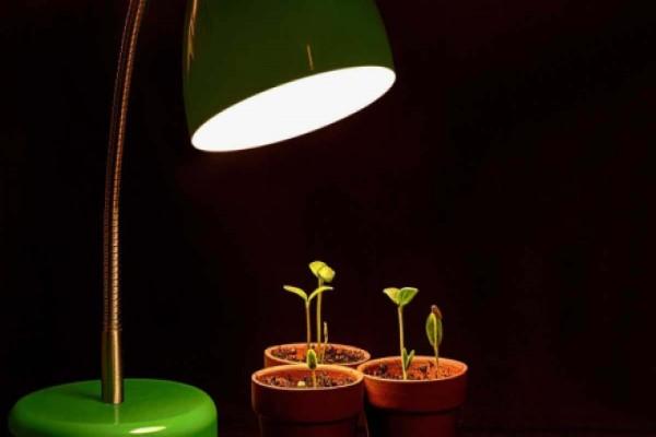 همه چیز درمورد نور رشد گیاه